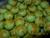 green_peas___RM20_per_pack